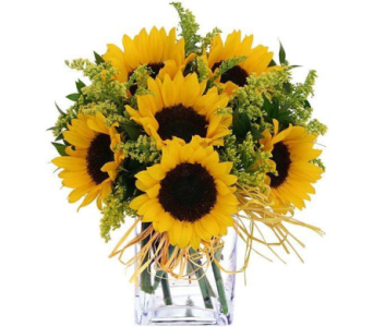 Sunflower Bomb in Nashville TN, Emma's Flowers & Gifts, Inc.