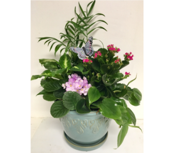 Bayberry Blue 9 inch Ceramic Planter w/ Kalanchoe in Wyoming MI, Wyoming Stuyvesant Floral