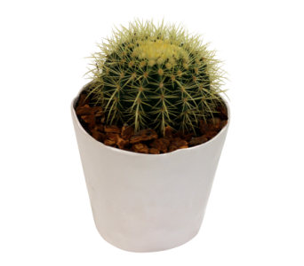 Golden Barrel Cactus in Detroit and St. Clair Shores MI, Conner Park Florist