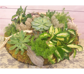 Pave Succulent Garden in Wellington FL, Wellington Florist