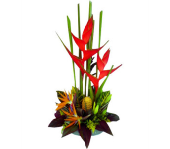 September Heliconia Wooden Box Design in Virginia Beach VA, Fairfield Flowers