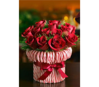December Candy Cane Rose Arrangement 2018 in Virginia Beach VA, Fairfield Flowers