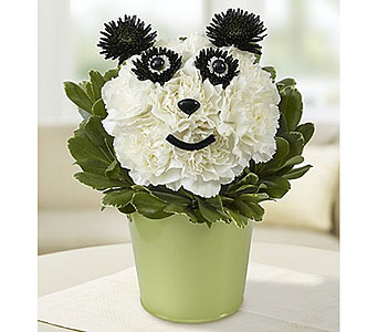 Panda Bear Hug in Campbell CA, Citti's Florists