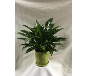 Custom Product in Fairfield OH, Novack Schafer Florist