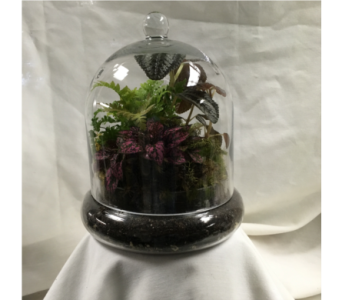 Terrarium in Fairfield OH, Novack Schafer Florist