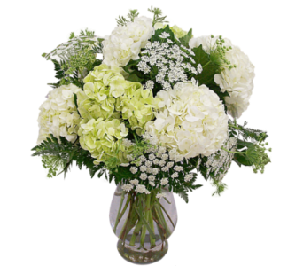 White & Green Hydrangea in Mesa AZ, Watson Flower Shops