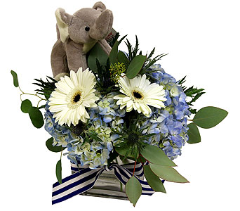 Welcome Baby in Detroit and St. Clair Shores MI, Conner Park Florist