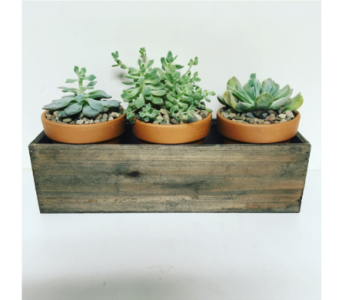 Vintage Succulents - 14 inch Wooden Box in Wyoming MI, Wyoming Stuyvesant Floral
