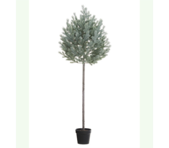 ALLSTATE FLROAL BLUE SPRUCE TOPIARY, 67 inch in Bellevue WA, CITY FLOWERS, INC.