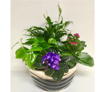 Two-Tone Ceramic with Blooming and Green Plants  in Wyoming MI, Wyoming Stuyvesant Floral