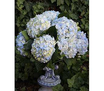 Lilting Blues in Birmingham MI, Tiffany Florist
