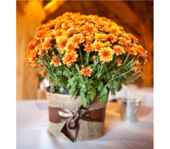 New England Mum in Needham MA, Needham Florist