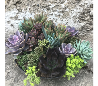 Grand Succulent Bowl in Dayton OH, Furst The Florist & Greenhouses