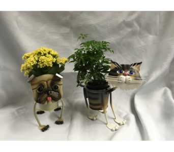 Animal Planter in Fairfield OH, Novack Schafer Florist