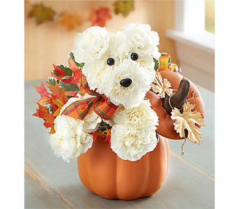 Fall Dog in Fredericksburg VA, Finishing Touch Florist