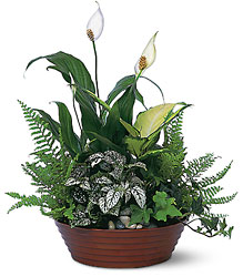Large Dish Garden-FREE DELIVERY in Cohasset MA, ExoticFlowers.biz