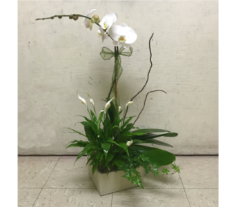 SERENITY GARDEN WITH WHITE ORCHID in Arlington VA, Twin Towers Florist