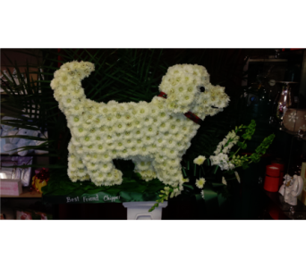 Dog-Maltese in Freehold NJ, Especially For You Florist & Gift Shop