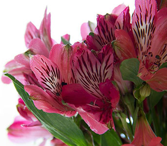 Six Occasions Silk in Fort Worth TX, Greenwood Florist & Gifts