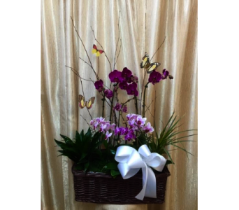 Orchids Field in Orange CA, Main Street Florist