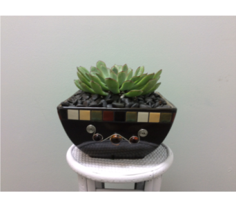 Jolie's Succulent in Andover MN, Andover Floral