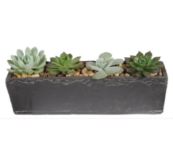 Slate Succulent Planter in Madison WI, Felly's Flowers
