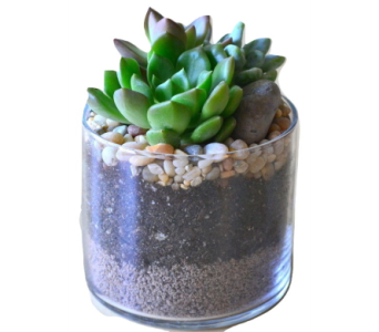 Succulents in a Cylinder in Waterbury CT, The Orchid Florist