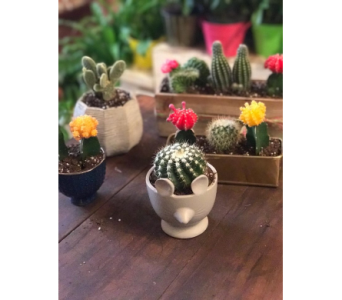 Assorted Cacti in Nashville TN, Emma's Flowers & Gifts, Inc.