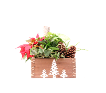 Wooden Christmas Planter in Grimsby ON, Cole's Florist Inc.