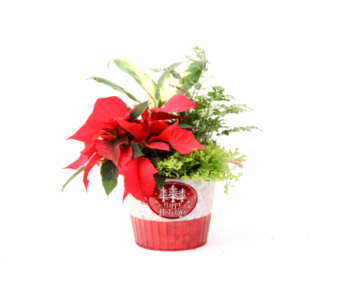 Happy Holidays Tin in Grimsby ON, Cole's Florist Inc.
