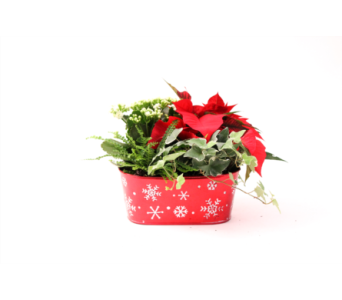 Red & White Snowflake Tin in Grimsby ON, Cole's Florist Inc.