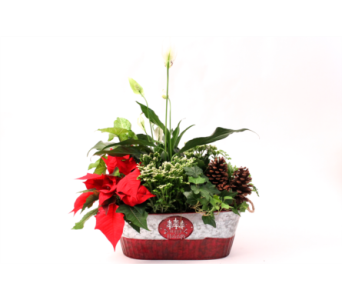 Happy Holidays Planter in Grimsby ON, Cole's Florist Inc.