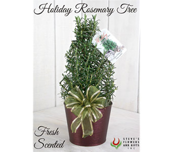 Holiday Rosemary Tree in Indianapolis IN, Steve's Flowers and Gifts