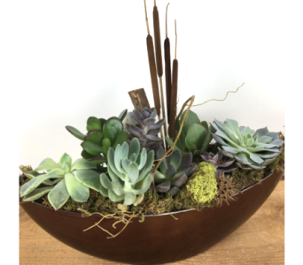 Modern Succulents in Baltimore MD, Raimondi's Flowers & Fruit Baskets