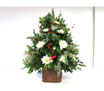 Boxwood Tree with bark base in Worcester MA, Holmes Shusas Florists, Inc