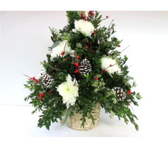 Deluxe Boxwood Tree in Worcester MA, Holmes Shusas Florists, Inc