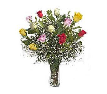 Stein Dozen Assorted Roses in Burlington NJ, Stein Your Florist