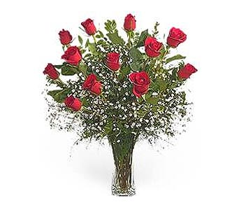 Stein Dozen Red Roses in Burlington NJ, Stein Your Florist