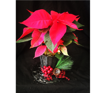 Festive Holiday Hat in Needham MA, Needham Florist