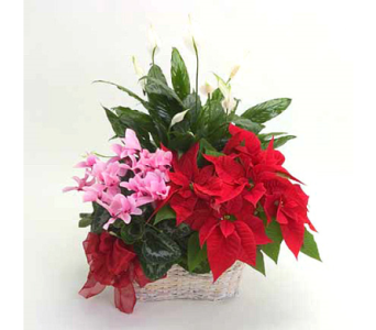 Christmas Combo Basket in Big Rapids, Cadillac, Reed City and Canadian Lakes MI, Patterson's Flowers, Inc.