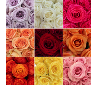 Roses for a Year in Drexel Hill PA, Farrell's Florist