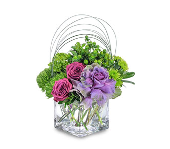 Magenta Shelter in Schaumburg IL, Deptula Florist & Gifts