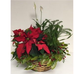 Laurel Wreath w/ Christmas Planter-12 inch basket in Wyoming MI, Wyoming Stuyvesant Floral