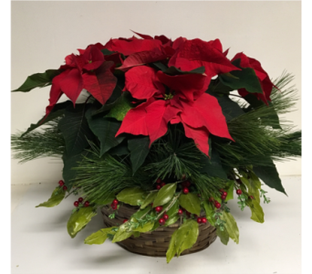 Laurel and Pine Poinsettia - 12 inch basket in Wyoming MI, Wyoming Stuyvesant Floral
