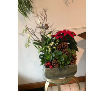 Christmas Planter  in White Rock BC, Ashberry & Logan