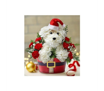 Santa Paws in Pittsburgh PA, Eiseltown Flowers & Gifts