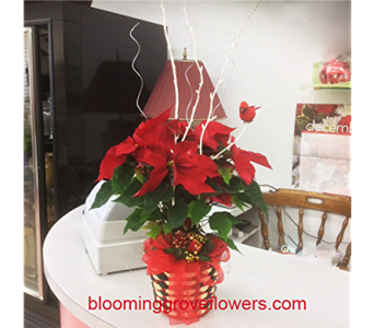 GFG4232 in Buffalo Grove IL, Blooming Grove Flowers & Gifts