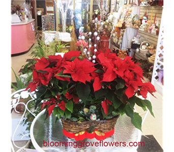 GFG4364 in Buffalo Grove IL, Blooming Grove Flowers & Gifts