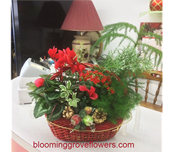 GFG4401 in Buffalo Grove IL, Blooming Grove Flowers & Gifts