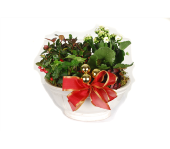 Oval Christmas Planter in Madison WI, Felly's Flowers